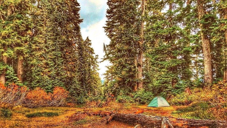 stealth camping tent hidden among trees