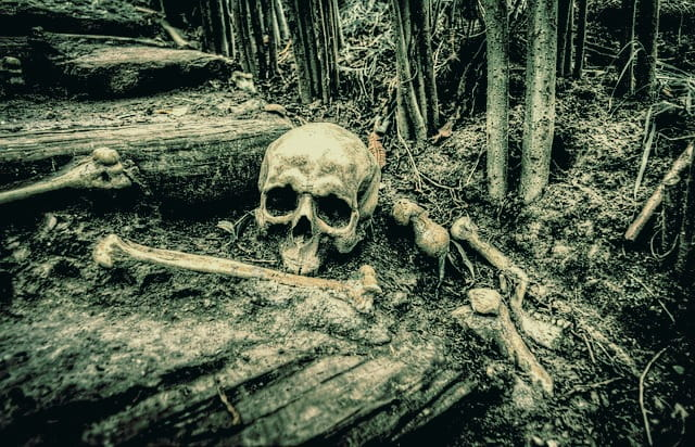 Skull and bones in the dirt