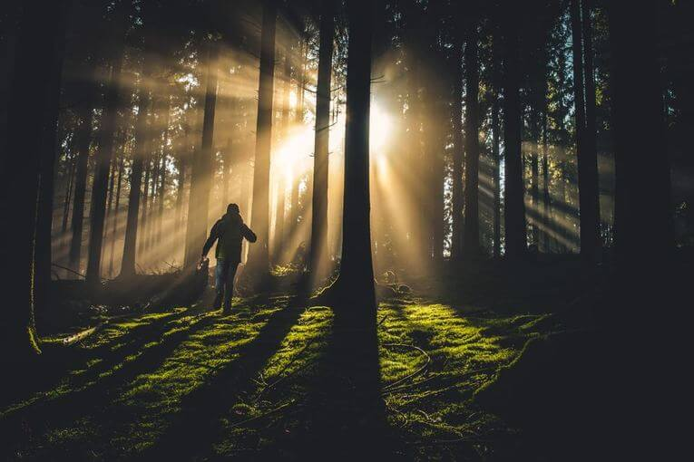 A person walking in the forest with sunlight shining through the trees