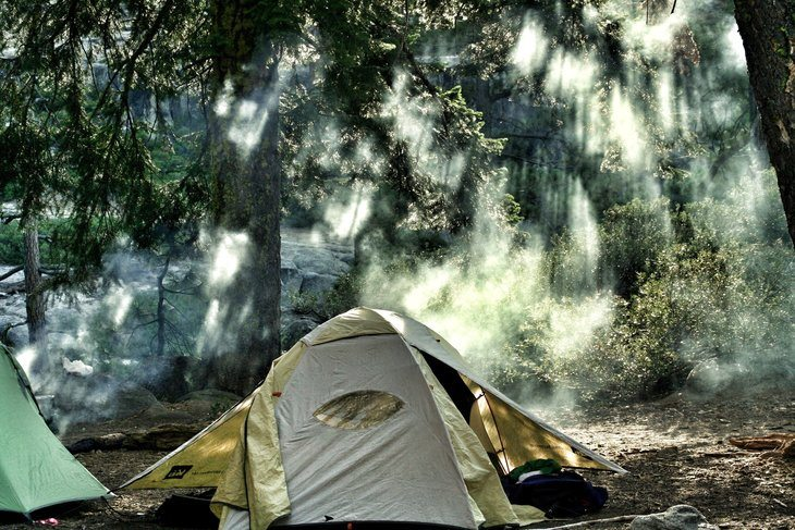 tent set up in a misty forest