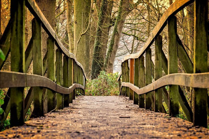an empty wooden bridge in the woods