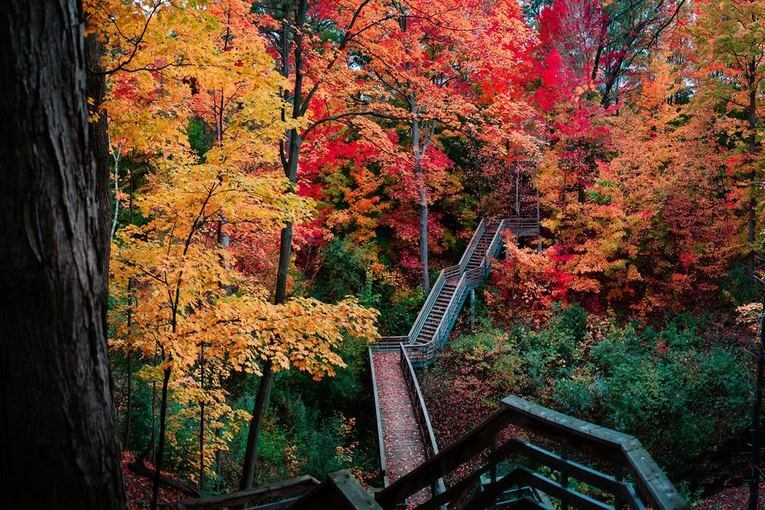 trees with yellow and red leaves and a wooden pathway