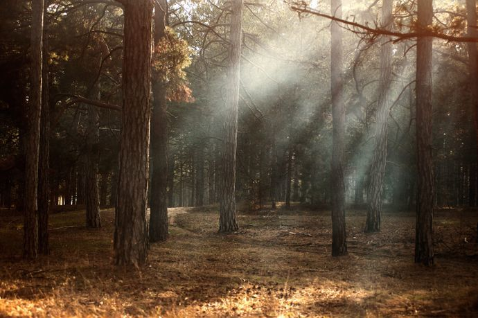 Forest with light shining on the ground