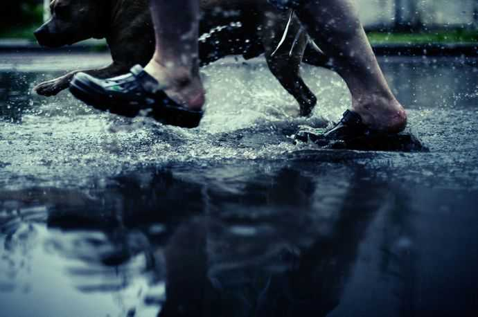 Two legs running through a puddle with shoes on and a dog next to him