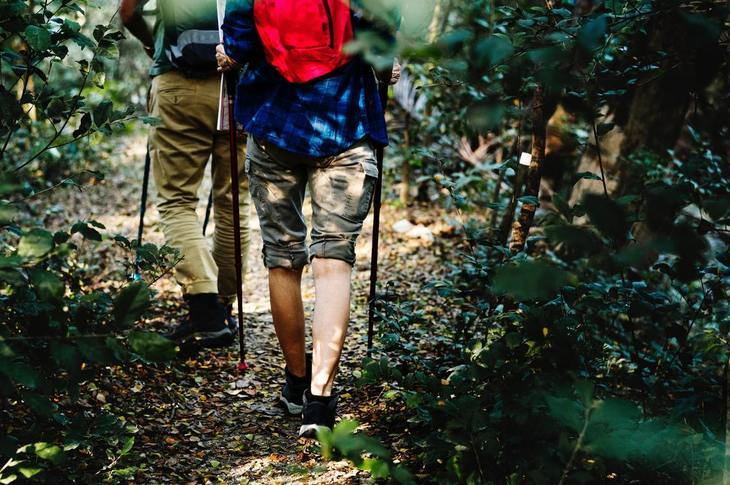 2 people hiking with trekking poles in the forest