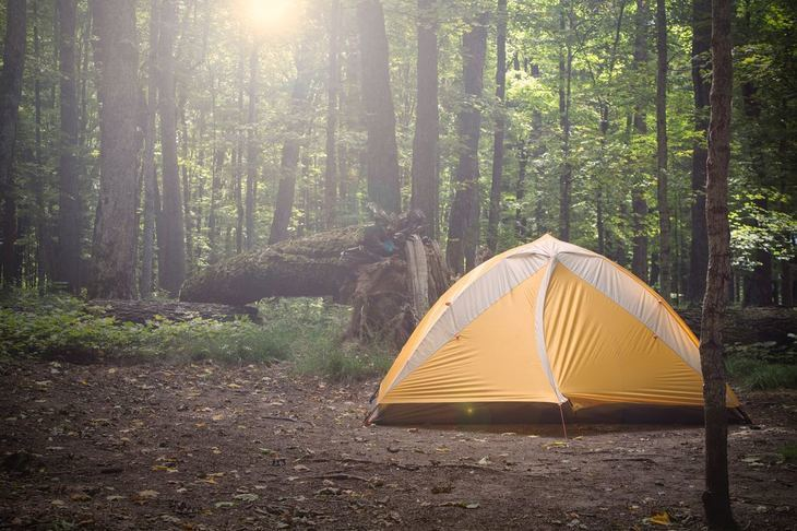 A tent in the forest surrounded by trees